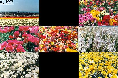 [Carlsbad Flower Field Image Map]